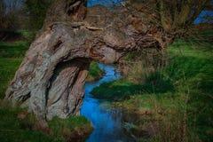 在小河旁边的老腐朽的树 免版税库存图片