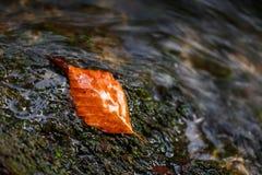 在小河的叶子 免版税库存照片