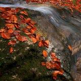 在小河的叶子 图库摄影