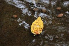 在小河的叶子 免版税库存图片
