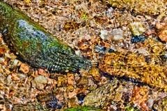 在小河的多彩多姿的鹅卵石 免版税库存图片