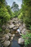 在小河的岩石在wairere附近的一个森林落,新西兰 免版税库存照片