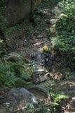 在小河的微小的木桥在密林 免版税库存图片