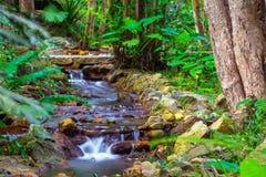 在小河的急流 亚龙湾热带天堂森林公园 免版税图库摄影