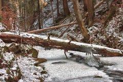 在小河的损坏的下落的树在强的风暴以后的谷在胜利 库存照片