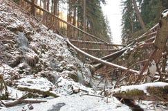 在小河的损坏的下落的树在强的风暴以后的谷 免版税库存照片