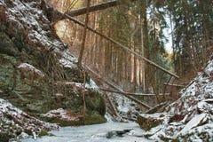 在小河的损坏的下落的树在谷在强以后的冬天 免版税库存图片