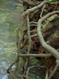 在小河的根 库存图片