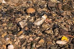 在小河的湿石头 库存照片