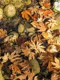 在小河的秋叶 免版税库存图片