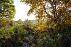 在小河的秋天 免版税图库摄影