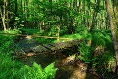 在小河的老桥梁在森林 库存图片