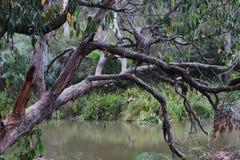 在小河的被缠结的胶 库存照片
