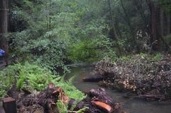 在小河附近的森林蕨 库存照片