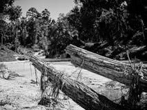 在小河B&W的死的树 免版税库存照片