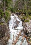在小河Studeny potok的瀑布在高Tatras,斯洛伐克 图库摄影