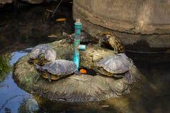 在小海岛上的乌龟 库存图片