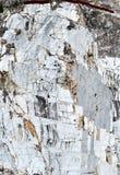 在小游艇船坞二卡拉拉的大理石猎物 免版税库存照片