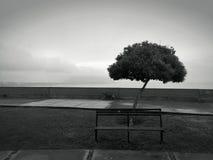 在小游艇船坞的偏僻的树有海景 免版税库存照片