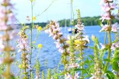 在小游艇船坞的夏天蜂 库存照片