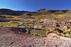 在小湖附近的典型的安地斯山的沙漠植被在早平均观测距离下 库存图片