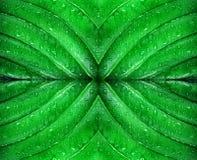 在小滴的绿色叶子水 关闭 库存图片