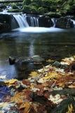 在小瀑布前面的五颜六色的叶子在Satina河 图库摄影