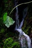 在小瀑布的叶子 库存图片