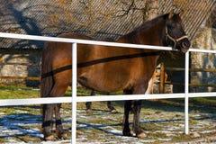 在小牧场的一匹棕色马 免版税库存图片
