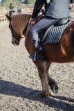 在小牧场的马 免版税库存图片