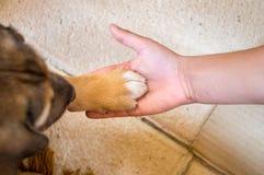 在小狗和孩子之间的友谊 免版税库存图片