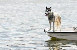 在小的小船的狗 库存照片