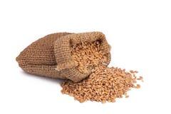 在小粗麻布大袋的麦子 库存照片