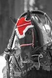 在小红骑兜帽的马 免版税库存照片