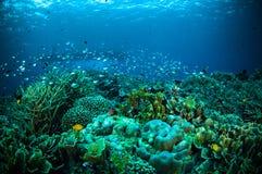 在小船下的一千条鱼bunaken苏拉威西岛水下的印度尼西亚 库存图片