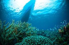 在小船下的一千条鱼bunaken苏拉威西岛水下的印度尼西亚 免版税库存图片