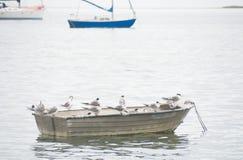 在小船栖息的鸟在水中 库存照片