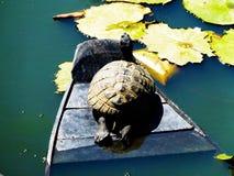 在小船的乌龟 库存图片