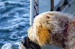在小船的咸狗 库存图片