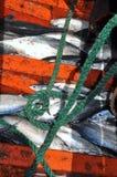 在小船的地下室的金枪鱼在芽庄市海咆哮 免版税库存图片