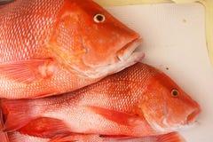 在小船的地板上的大红鲷鱼 库存照片