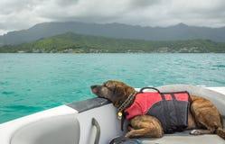 在小船的懒惰狗 免版税库存照片