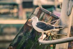在小船的海鸥 免版税库存图片