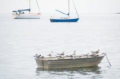 在小船的燕鸥 库存照片