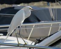 在小船的苍鹭在港口 免版税库存图片