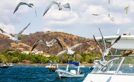在小船的鸟 免版税库存照片