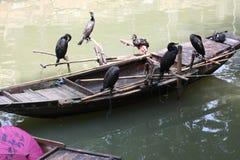 在小船的鸬鹚在中国 免版税库存照片