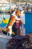 在小船码头的狗 免版税库存照片