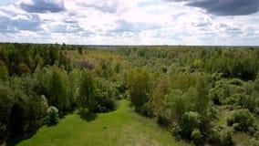 在小草甸附近的美丽如画的绿色林业区域在天空蔚蓝下 股票视频