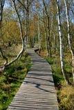 在小西部漂泊温泉镇Frantiskovy Lazne Franzensbad在秋天-捷克附近的自然保护区Soos 免版税库存图片